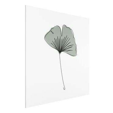 Forex Fine Art Print - Gingko Blatt Line Art - Quadrat 1:1