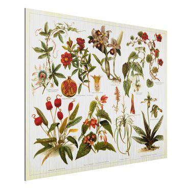 Aluminium Print gebürstet - Vintage Lehrtafel Tropische Botanik II - Querformat 3:4