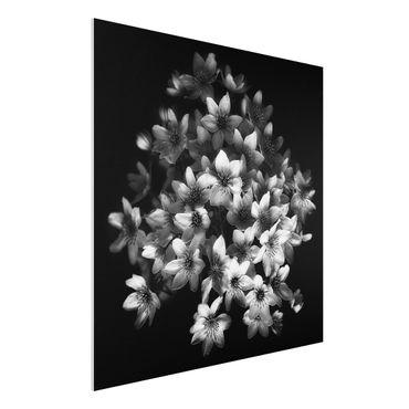 Forex Fine Art Print - Dunkler Clematis Strauß - Quadrat 1:1