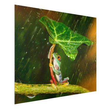 Forex Fine Art Print - Ein Frosch im Regen - Querformat 3:4