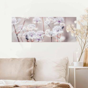 Glasbild - Federleichte Wildblumen - Panorama