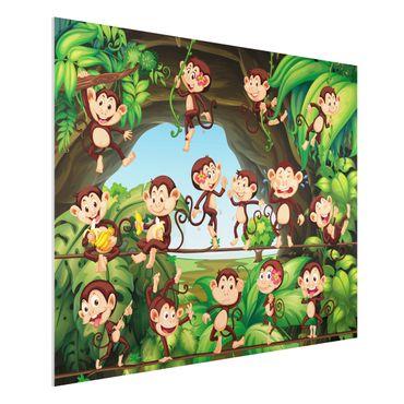 Forexbild - Dschungelaffen