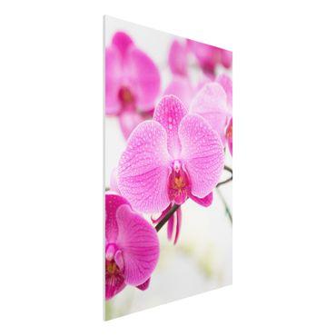 Forexbild - Nahaufnahme Orchidee