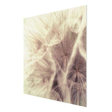 Forexbild - Pusteblumen Makroaufnahme