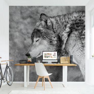 Fototapete - Winter Wolf