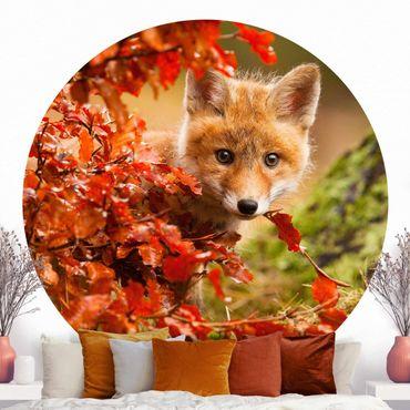 Runde Tapete selbstklebend - Fuchs im Herbst