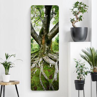 Garderobe - Alter Baum - Grün