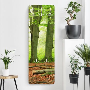 Garderobe - Mighty Beech Trees - Landhaus Grün