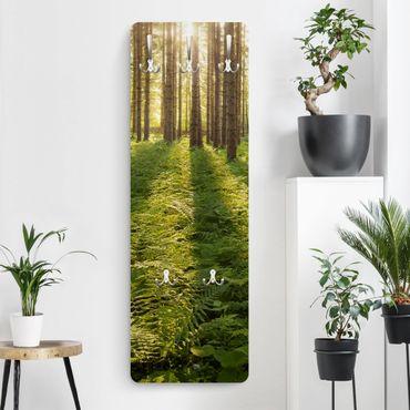 Garderobe - Sonnenstrahlen in grünem Wald