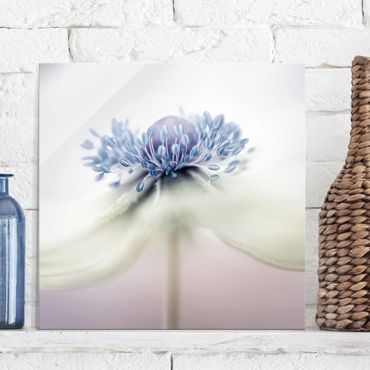 Glasbild - Anemone in Violett - Quadrat 1:1