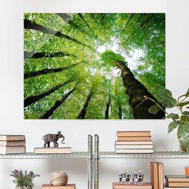 Glasbild Wald - Bäume des Lebens - Waldbild Quer 4:3