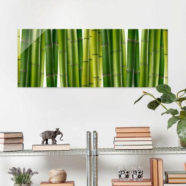 Glasbild - Bambuspflanzen - Panorama Quer