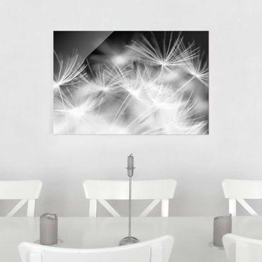 Glasbild - Bewegte Pusteblumen Nahaufnahme auf schwarzem Hintergrund - Quer 3:2