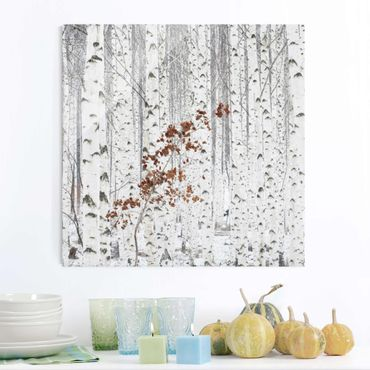 Glasbild - Birken im Herbst - Quadrat 1:1