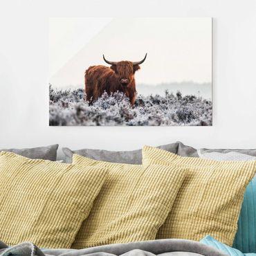 Glasbild - Bison in den Highlands - Querformat 2:3