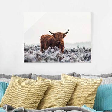Glasbild - Bison in den Highlands - Querformat 3:4