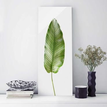 Glasbild - Blatt Calathea-ornata 01 - Panel