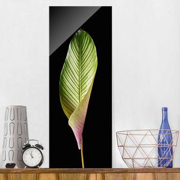 Glasbild - Blatt Calathea-ornata auf Schwarz 03 - Panel