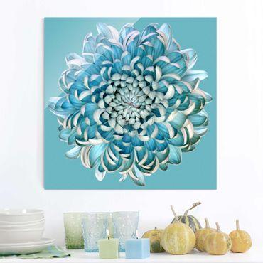Glasbild - Blaue Chrysantheme - Quadrat 1:1