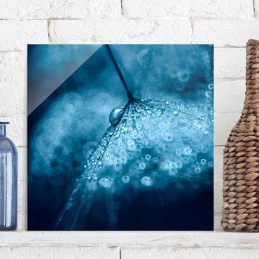 Glasbild - Blaue Pusteblume im Regen - Quadrat 1:1