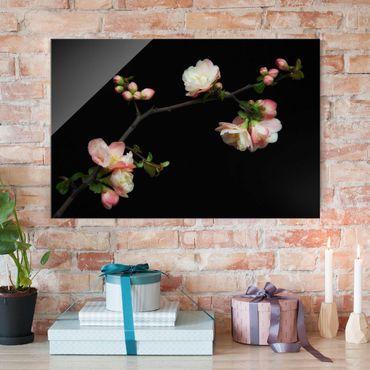 Glasbild - Blütenzweig Apfelbaum - Querformat 3:2