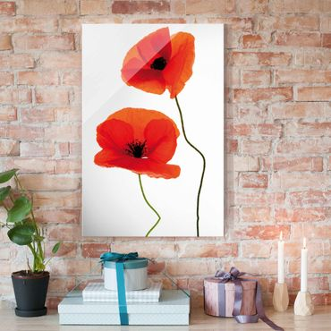 Glasbild - Charming Poppies - Hoch 2:3 - Blumenbild Glas