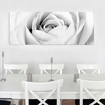Glasbild - Close Up Rose - Panorama Quer