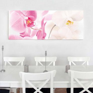 Glasbild - Delicate Orchids - Panorama Quer
