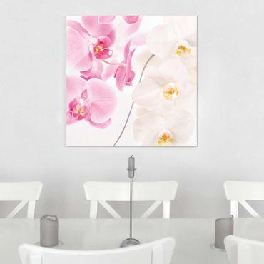 Glasbild - Delicate Orchids - Quadrat 1:1
