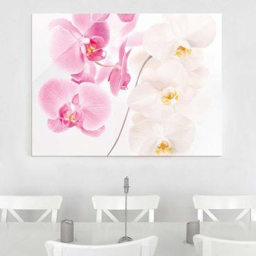 Glasbild - Delicate Orchids - Quer 4:3