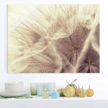 Glasbild - Detailreiche Pusteblumen Makroaufnahme mit Vintage Blur Effekt - Quer 4:3 - Blumenbild Glas
