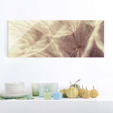 Glasbild - Detailreiche Pusteblumen Makroaufnahme mit Vintage Blur Effekt - Panorama Quer - Blumenbild Glas