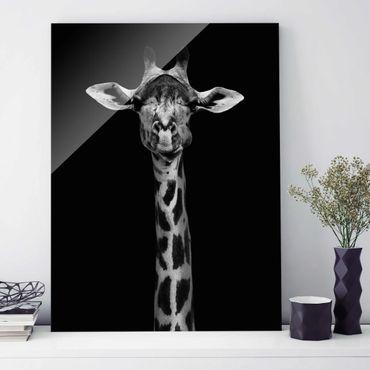 Glasbild - Dunkles Giraffen Portrait - Hochformat 4:3
