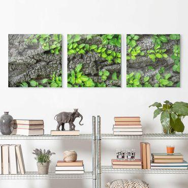 Glasbild Efeuranken Baumrinde - mehrteilig - 3-teilig