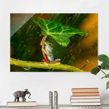 Glasbild - Ein Frosch im Regen - Querformat 2:3