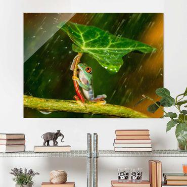 Glasbild - Ein Frosch im Regen - Querformat 3:4