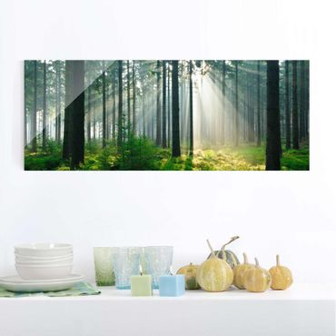 Glasbild - Enlightened Forest - Panorama Quer