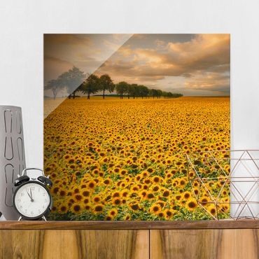 Glasbild - Feld mit Sonnenblumen - Quadrat 1:1