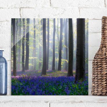 Glasbild - Frühlingstag im Wald - Quadrat 1:1