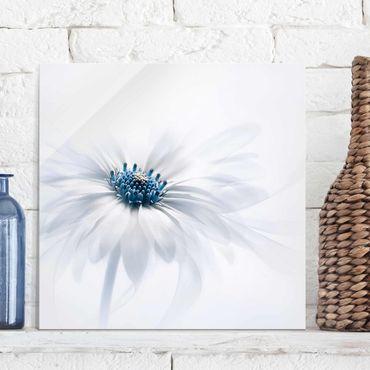 Glasbild - Gänseblümchen in Blau - Quadrat 1:1