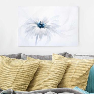 Glasbild - Gänseblümchen in Blau - Quer 3:2
