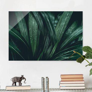 Glasbild - Grüne Palmenblätter - Querformat 3:2
