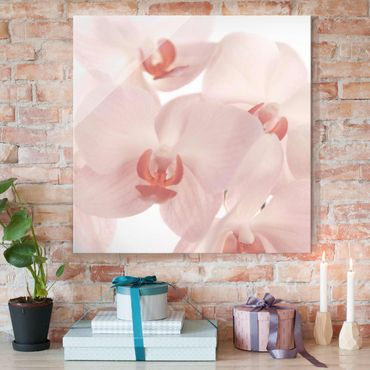 Glasbild - Helle Orchidee - Svelte Orchids - Quadrat 1:1