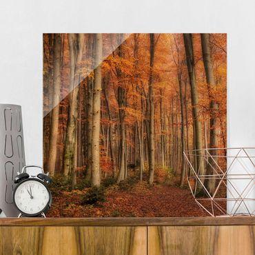 Glasbild - Herbstspaziergang - Quadrat 1:1