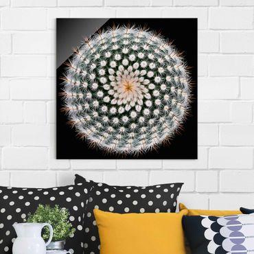 Glasbild - Kaktusblüte - Quadrat 1:1