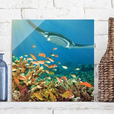 Glasbild - Korallenriff - Quadrat 1:1