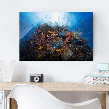 Glasbild - Lagune mit Fischen - Quer 3:2