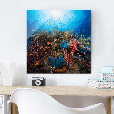 Glasbild - Lagune Unterwasser - Quadrat 1:1