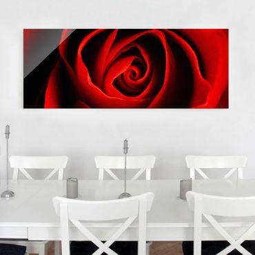 Glasbild - Liebliche Rose - Panorama Quer - Blumenbild Glas