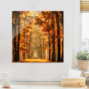 Glasbild - Märchenwald im Herbst - Quadrat 1:1